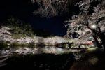 Sakura light up Hirosaki